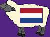 Sheep Dutch