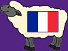 Sheep French