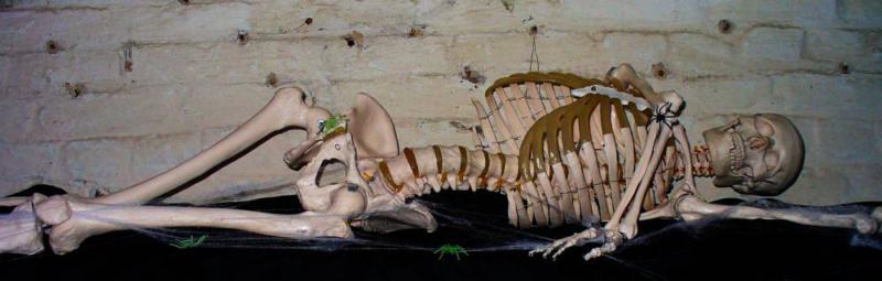 http://halloween.rothe.ws/2010/images/atsb00056.jpg