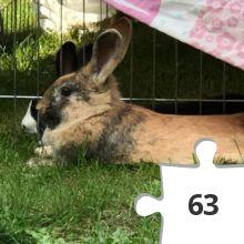 Jigsaw puzzle - 38 Heidi Rose Bunny Hop