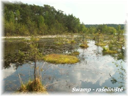 Swamp - rašeliniště