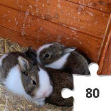 Jigsaw puzzle - 32 Heidi Rose Bunny Hop