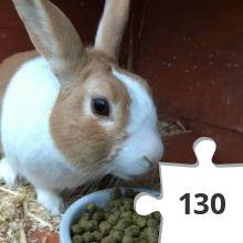 Jigsaw puzzle - 42 Heidi Rose Bunny Hop