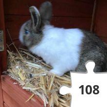 Jigsaw puzzle - 44 Heidi Rose Bunny Hop
