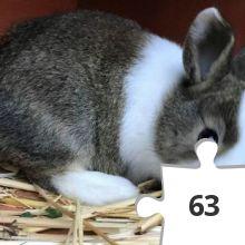 Jigsaw puzzle - 26 Heidi Rose Bunny Hop