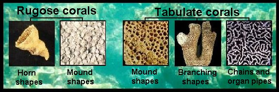 Image result for Miami coral fossil types