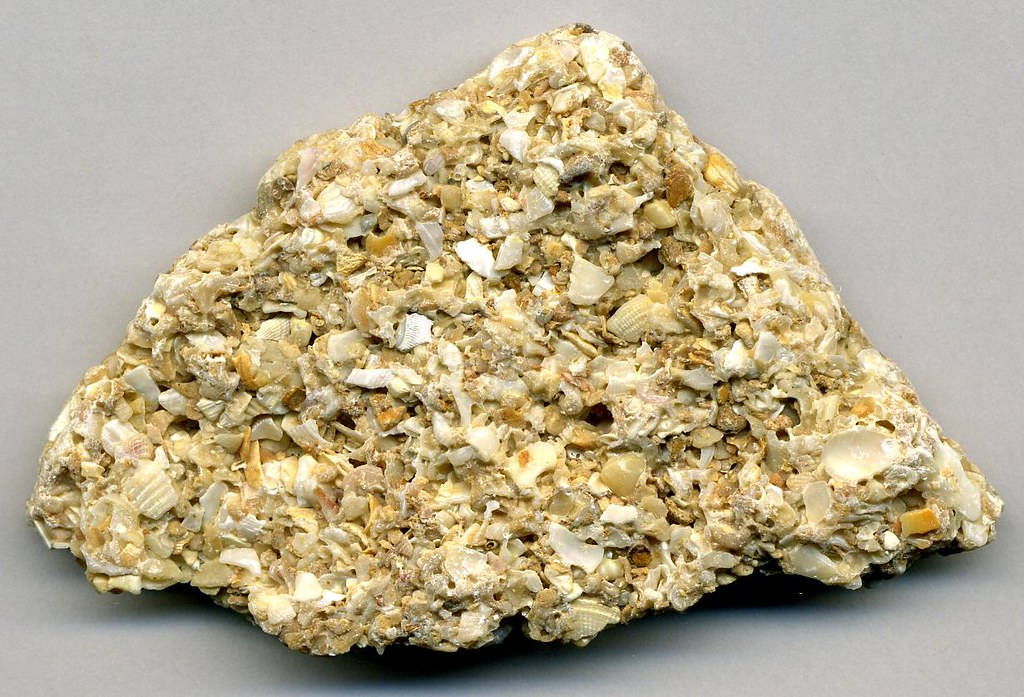 Image result for limestone coquina
