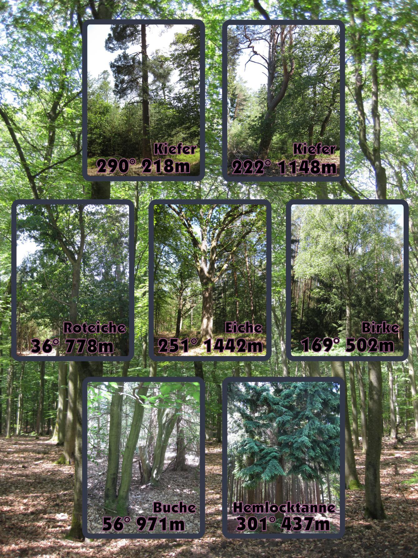 Bäume2