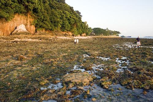 Tanjung Rimau