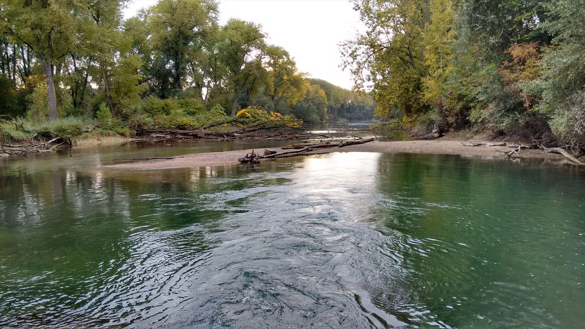 Rheinwasserstand Maxau