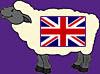 Sheep English